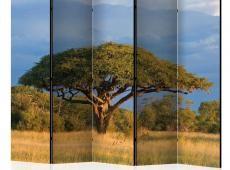 Paraván - African acacia tree, Hwange National Park, Zimbabwe II [Room Dividers]